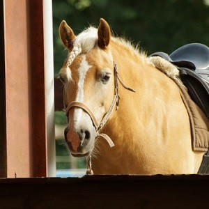 Met je eigen paard op pad!
