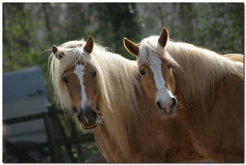 Onze paarden.. een hele kudde!
