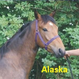 Alaska klein