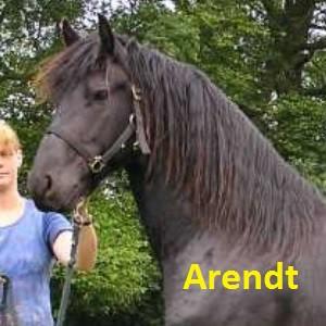 Arendt klein