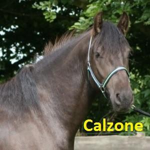 Calzone klein