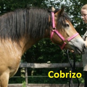 Cobrizo klein