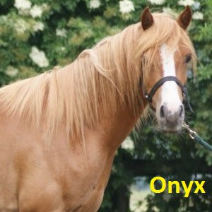 Onyx klein