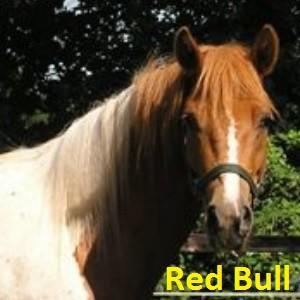 Red Bull klein