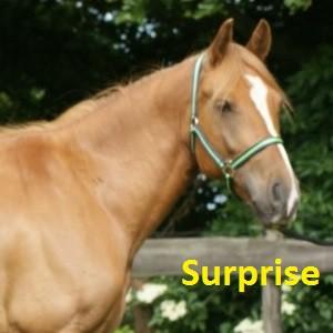 Surprise klein