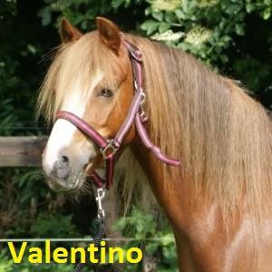 Valentino klein
