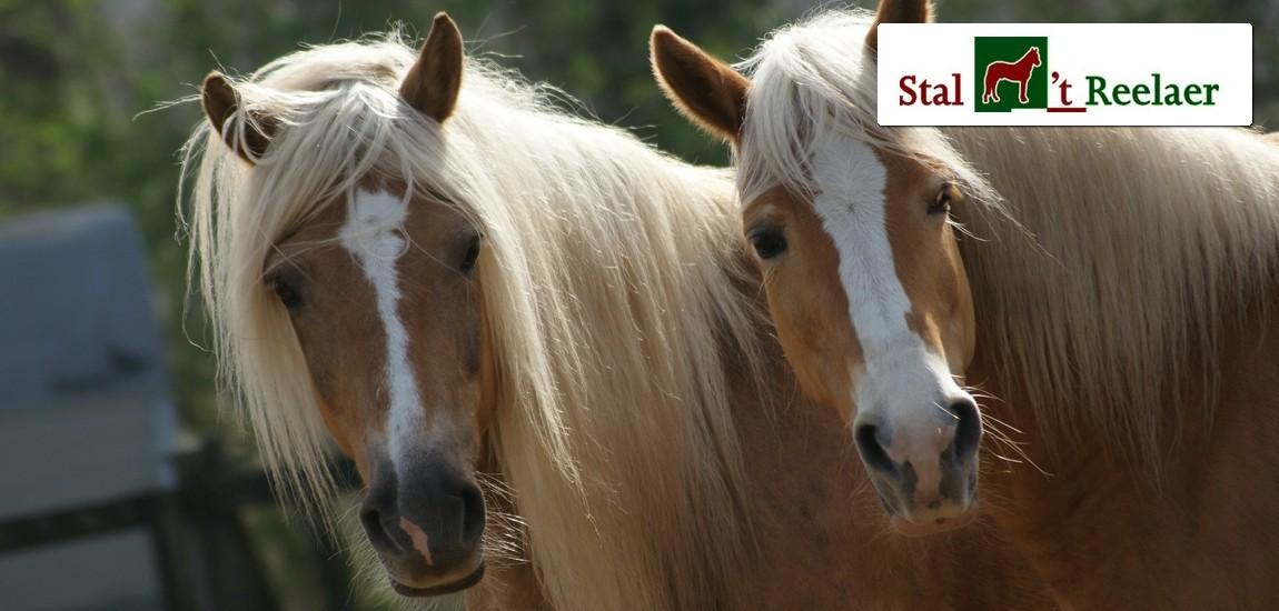 Kinderfeestje met pony's